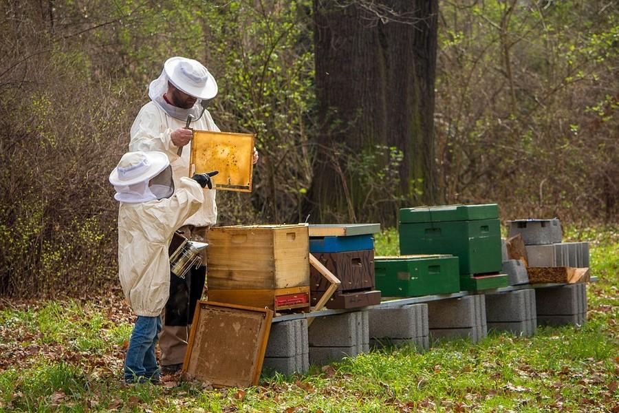 Api e miele, l'anno peggiore di sempre